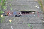 Adair Walk Broken Boardwalk#3
